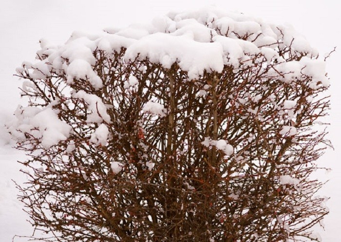 9. There's something quite special about this snow-covered bush. It's simple, yet so dramatic at the same time.