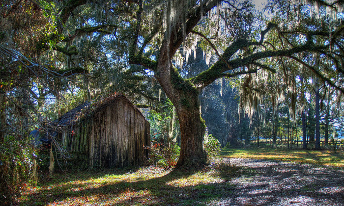 6. There could definitely be an old witch living inside this abandoned barn near Micanopy.