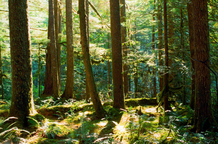 3. Parts of Oregon are technically considered Temperate Rainforests.