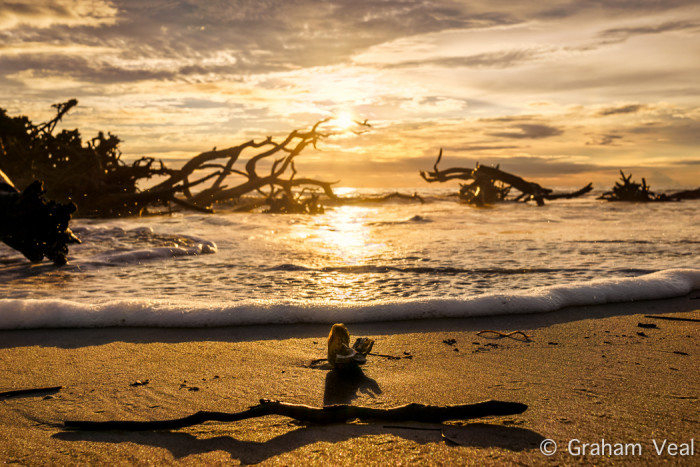 3. Driftwood Beach Sunset
