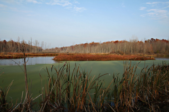 9. Muscatatuck National Wildlife Refuge is home to some incredible wetlands.
