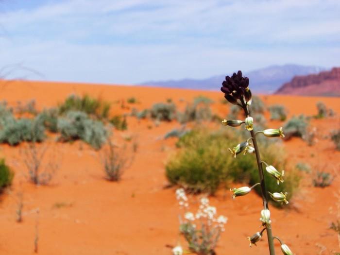 9. Desert