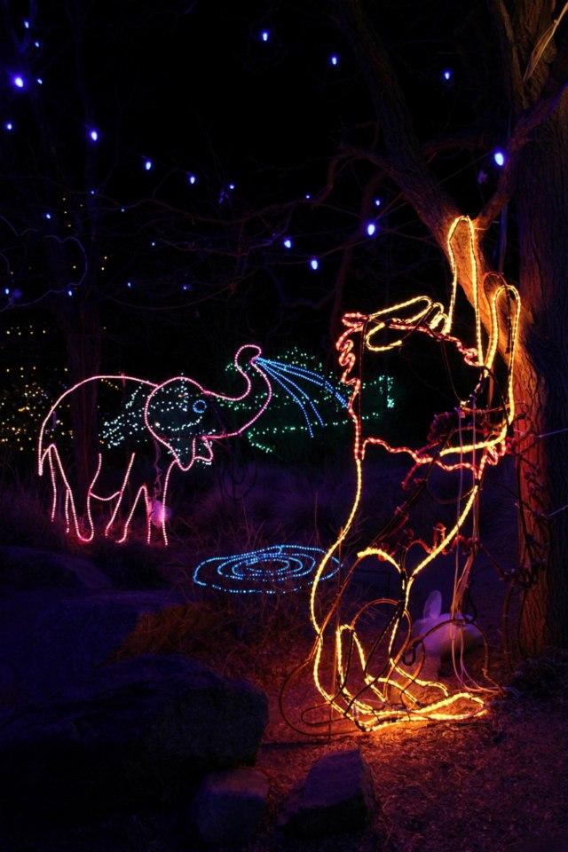5. Electric Safari (Colorado Springs)