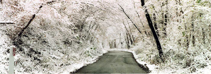 1.  The trees look so frigid just after an ice storm.