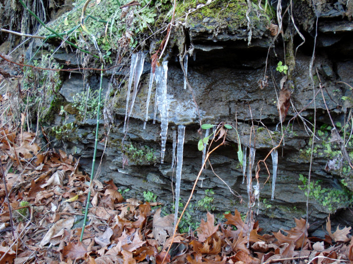 7. This picture seems to represent several seasons at once with green plants, fallen leaves, and icicles.