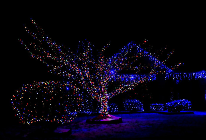 8. There's just something about blue Christmas lights.... You can't help but love them.