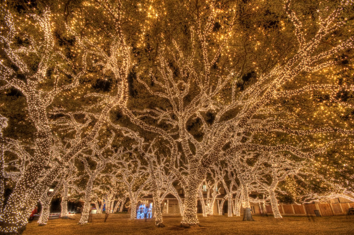 And these trees in the town square are quite possibly the most stunning thing I've ever seen.