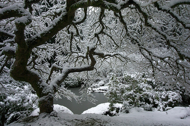 7. The Portland Japanese Garden covered in snow.