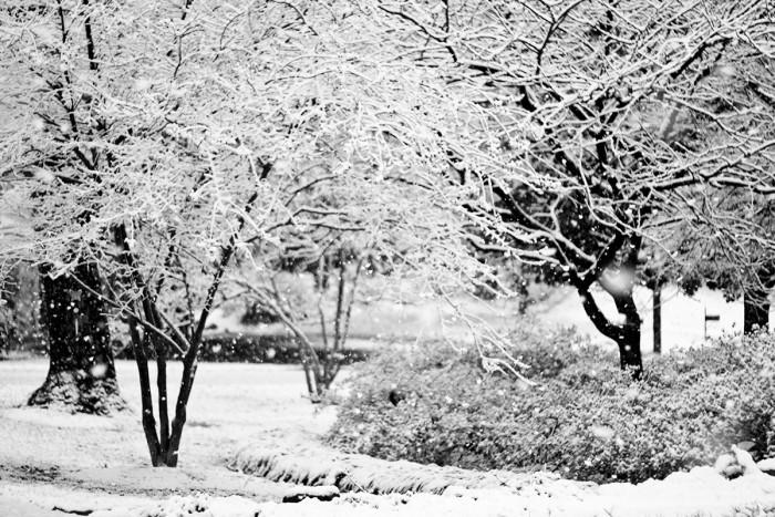 10. Dunwoody, GA - March 1, 2009