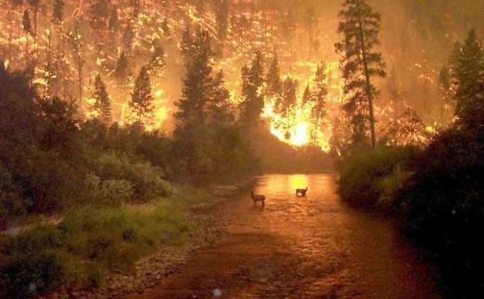 2) 3.1 million acres burned in forest fire.