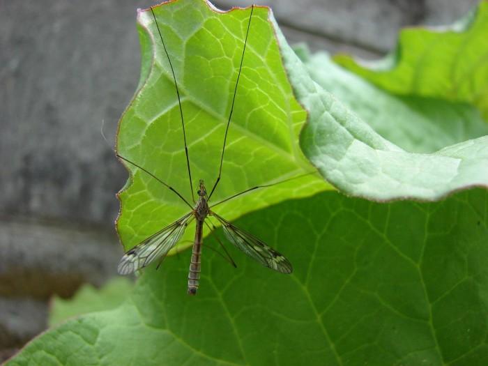 3. Battling ferocious mosquitoes doesn't frighten you.