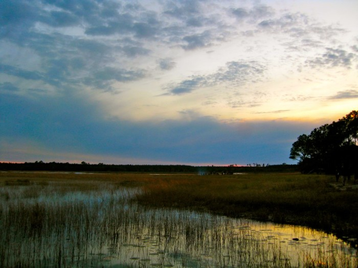 Florida: Ocala National Forest