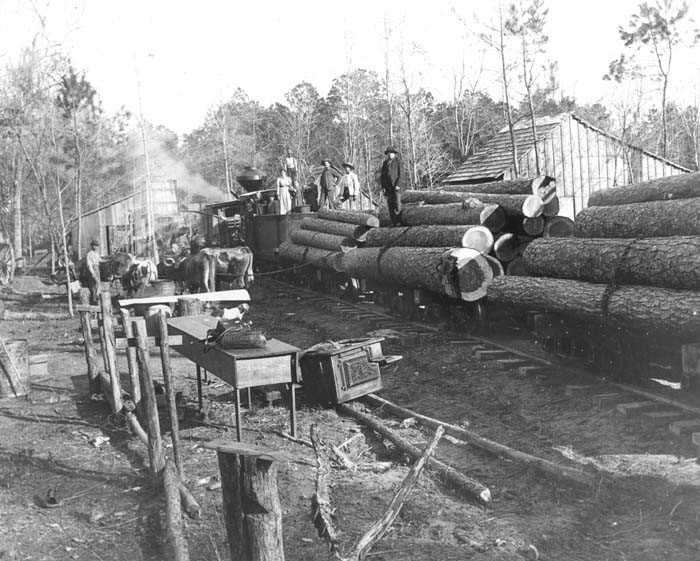 1. With all the trees in Texas, it's no wonder logging has always been a major industry.