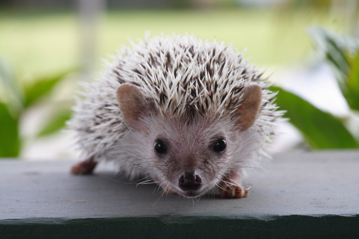 10. And hedgehogs!