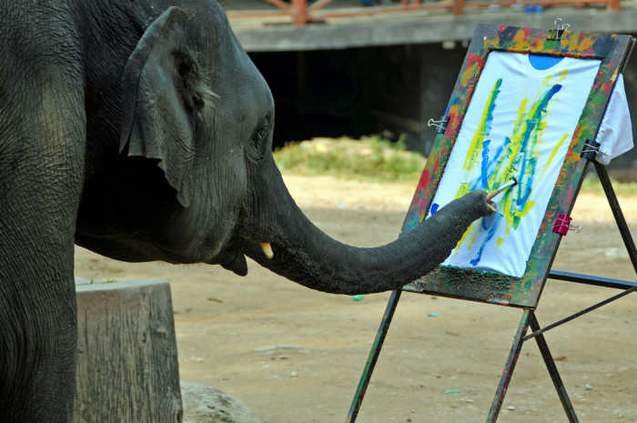 8. 1998: Famous for her painting career, Ruby the painting elephant had to be euthanized following severe birthing complications.