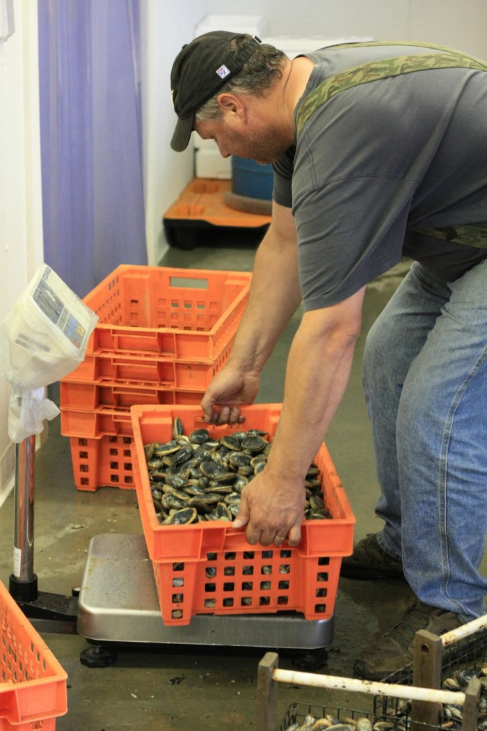 8. More support for Maine's clammers.