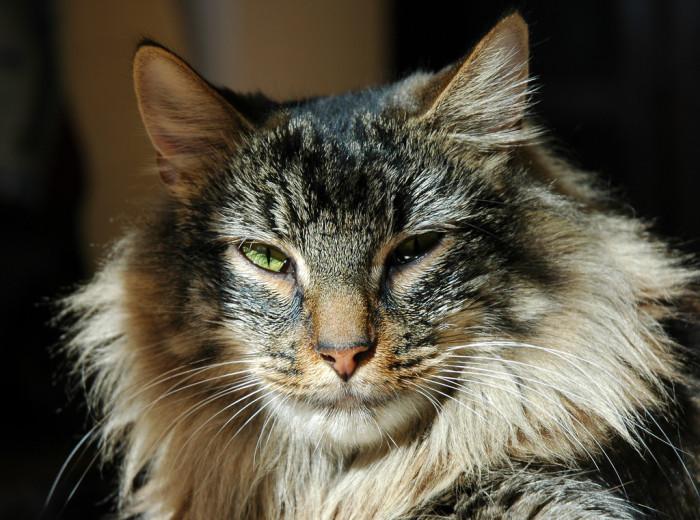 2. Cats took over Massachusetts.