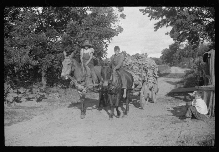 4. Children near Manning bring in tobacco from the field in 1939.