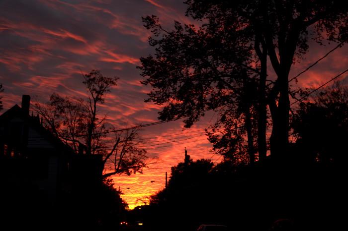 6. Tree-Lined Sunset, Brunswick