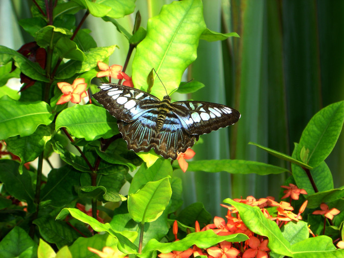 4. Relax at the butterfly habitat.