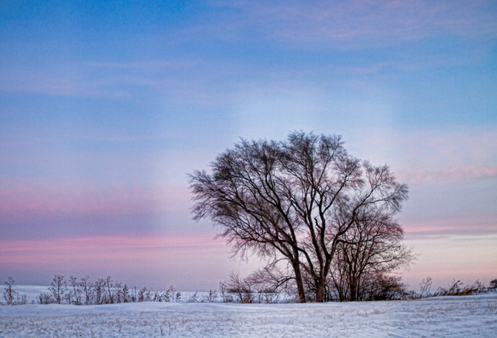 12. The sun rises over a snowy field and a big, strong tree.