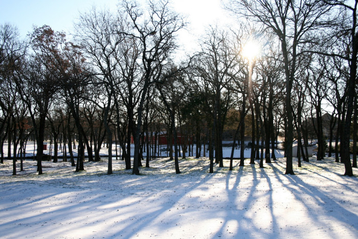 8) Despite the cold, frozen ground, the sun was shining high in the sky on Christmas morning 2009. (Dallas)