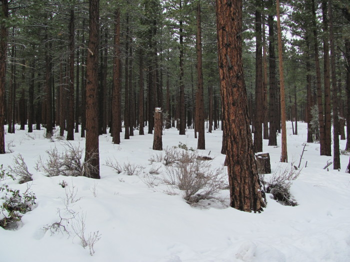 15. In December 2009, the grounds of this forest, located in Galena, were completely blanketed in snow.