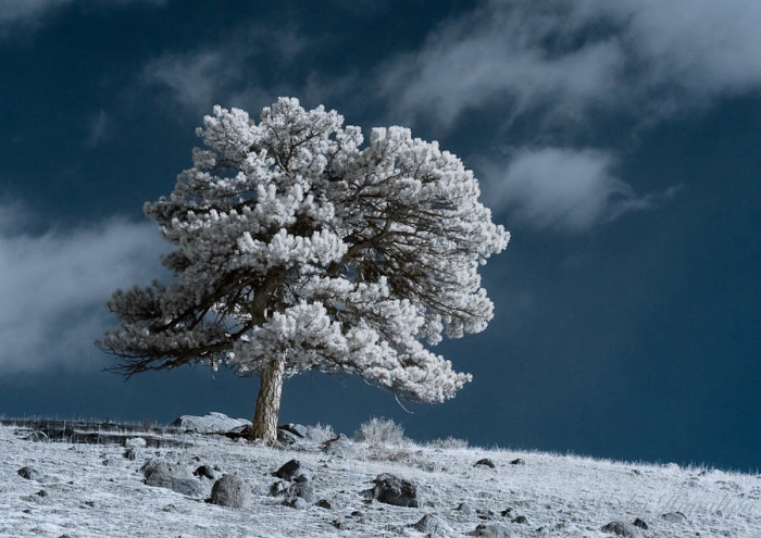 14. A lone tree in Rocky Mountain National Park