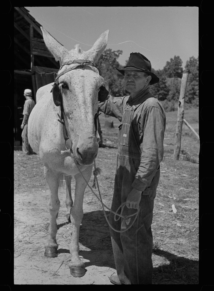 4. A Lee County tenant farmer poses with his mule.