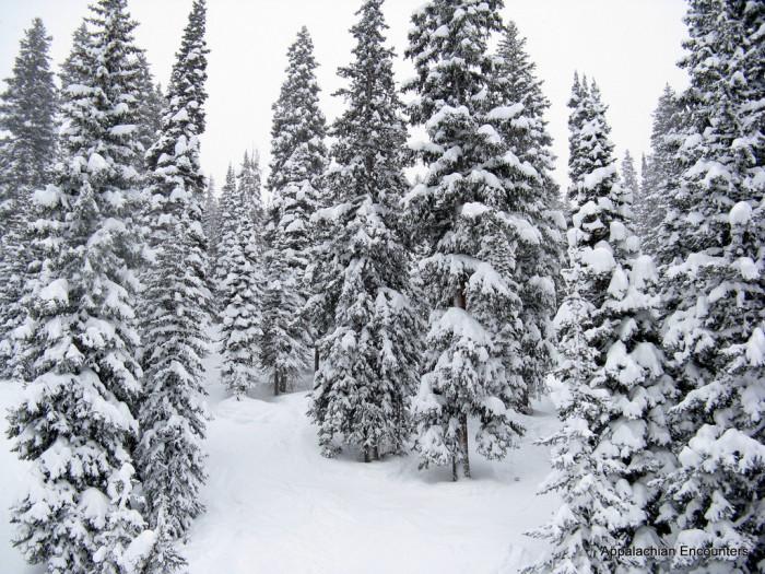 6. Snow makes everything so beautiful.