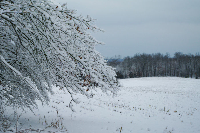 7. Even the frozen trees look great!