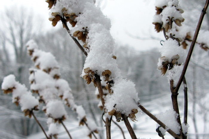 7. The beauty of the snow somehow makes these dead plants come alive. This capture is stunning!