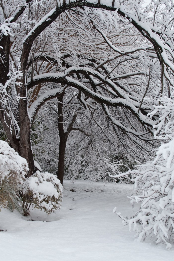 3) These tree branches look like the gateway to a winter wonderland. (Fort Worth)