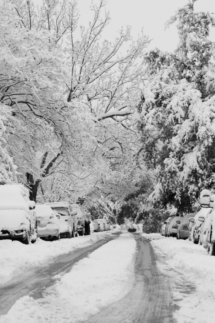 4) Snow-covered trees have a timeless beauty. (Fort Worth)