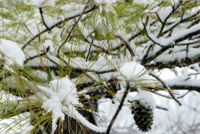 2. These snow covered pine branches are lovely! Don't you agree?