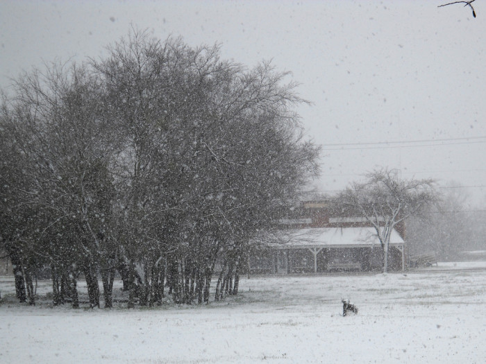 6) Capturing the snow in the midst of its fall is an opportunity to cherish. (Central Texas)