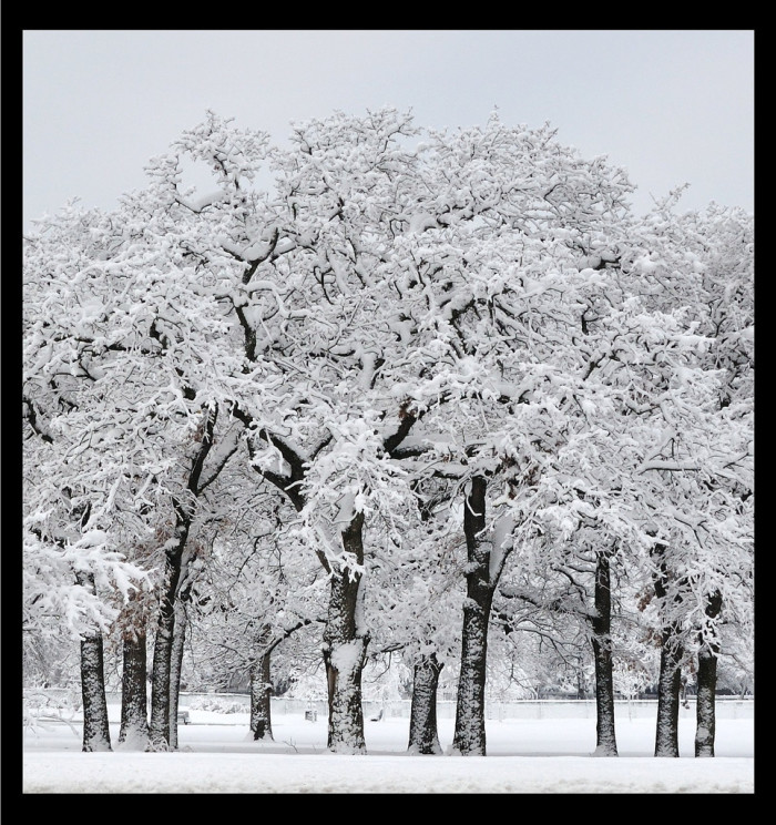 1) The snow fell so perfectly on these trees, they almost don't look real. (Southlake)