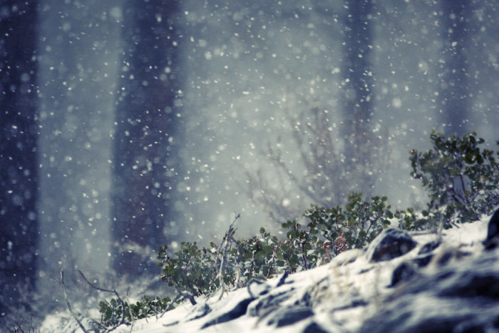 12. Wow! What a magical winter scene that's been captured here in Incline Village!
