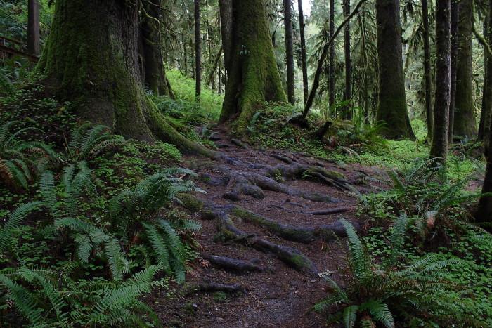 6. Quinault Rainforest