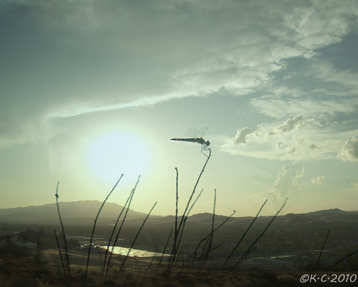 9. A dragonfly is keeping watch over the Truckee Meadows as the sun sets.