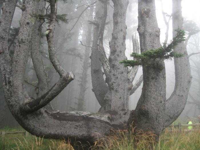 11. Octopus Tree