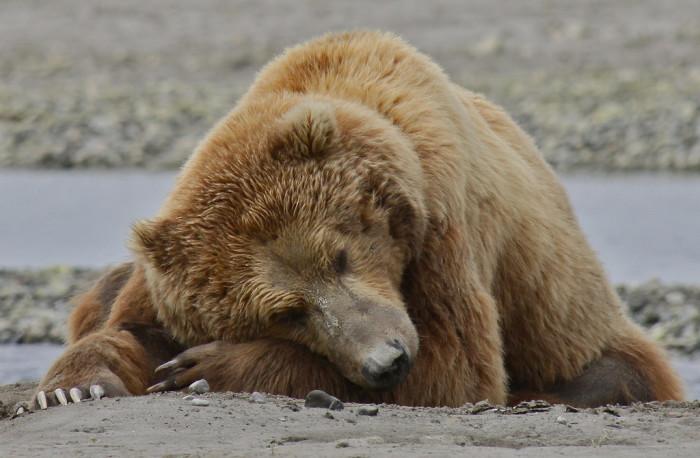 7) Big bears.