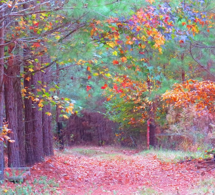 5. Colorful Fall Foliage