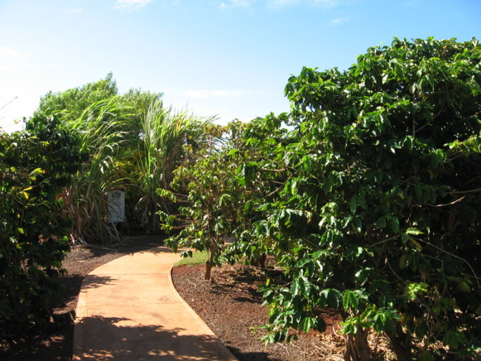 5) Tour a coffee farm.