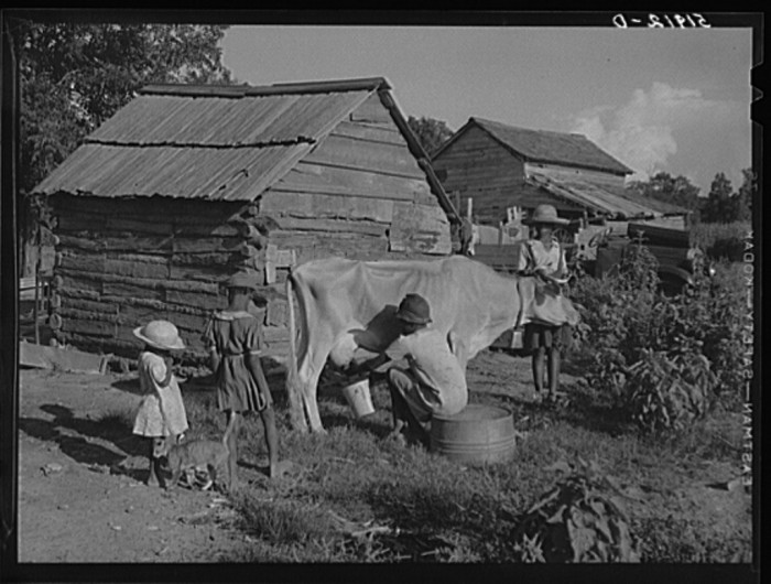 5. And everyone lent a helping hand around the farm. Manning, 1939.