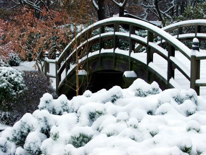 5.Snow at Missouri Botanical Garden