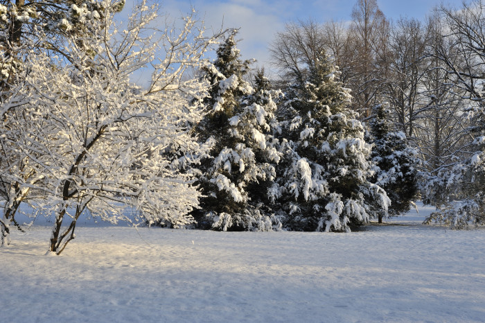 5.Winter at Tower Grove Park, St. Louis