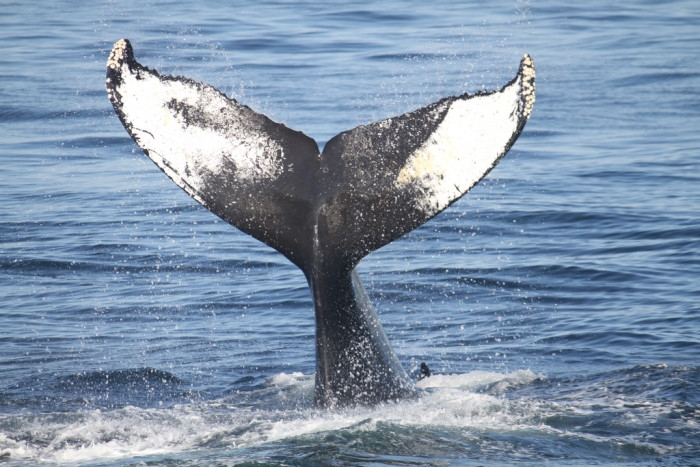 5. Go whale watching off the coast of Cape May.