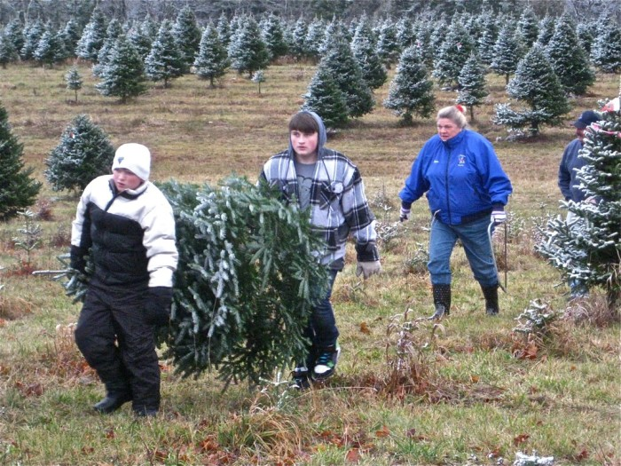 9. The Maine Christmas Tree Association makes sure you never have to decorate a fake tree.