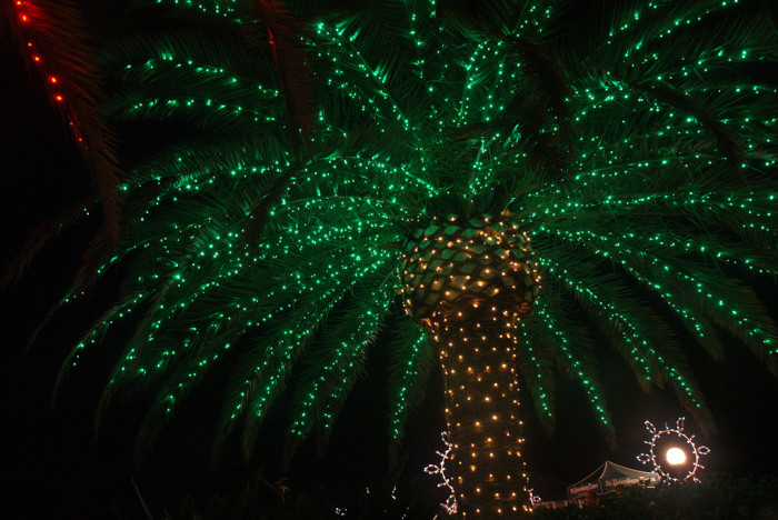 3. At Christmastime we light up palm trees.
